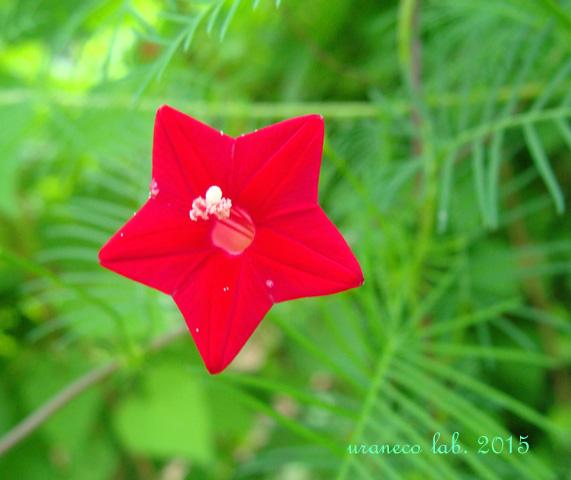 8月10日red star