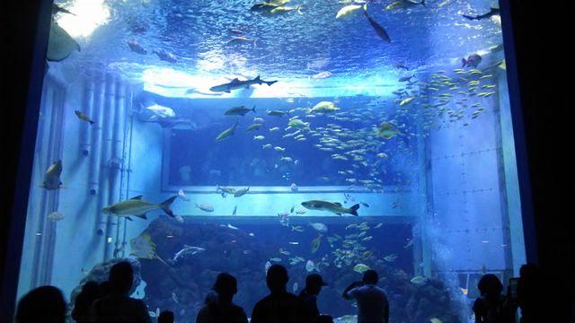 上越水族館2015夏