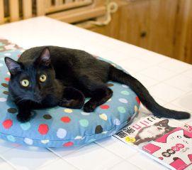 黒猫カフェ01