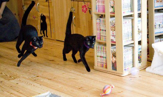 黒猫カフェ03