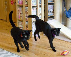 黒猫カフェ04