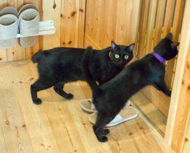 黒猫カフェ05