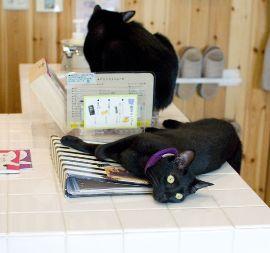 黒猫カフェ06