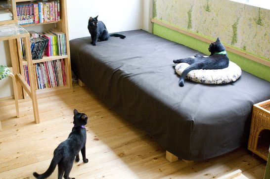 黒猫カフェ08