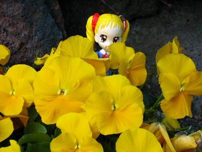 菜の花探して 025