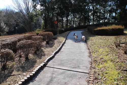 錦織公園00011