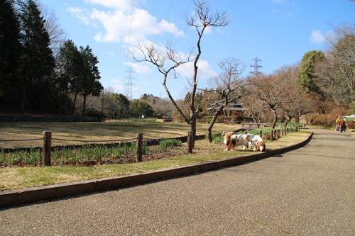 錦織公園00010