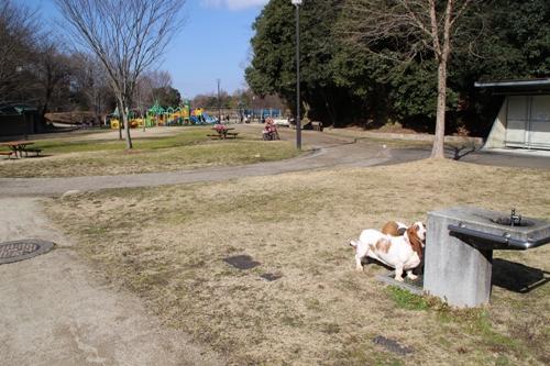 錦織公園00016