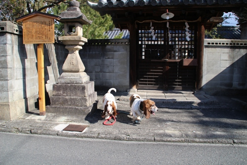 西ノ京00008