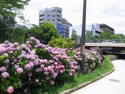 大横川親水公園緑道7