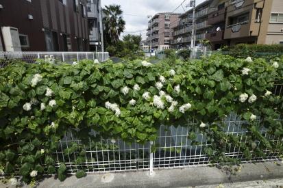 nakanoshima-kanagawa_15-08-11-0078.jpg