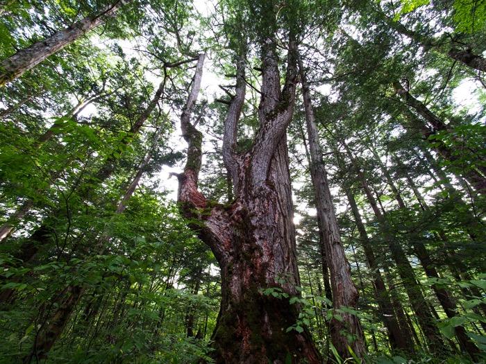 徳沢 森林