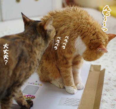 daijyoudasdadsaのコピー