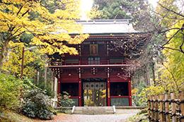 141124日立市御岩神社三本杉