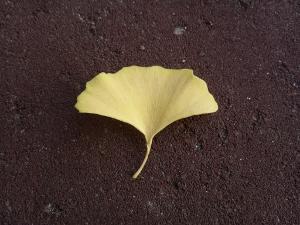 イチョウの葉 (300x225)