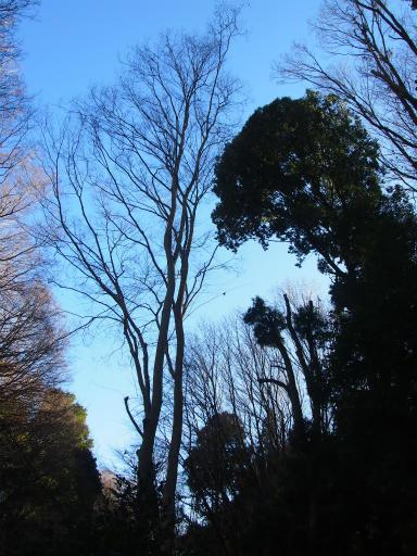 20150131・荒幡富士03