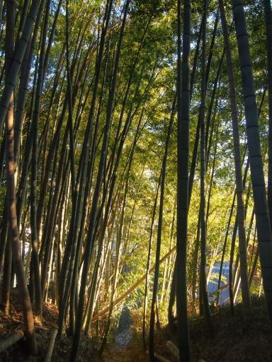 20150131・荒幡富士の木の空3