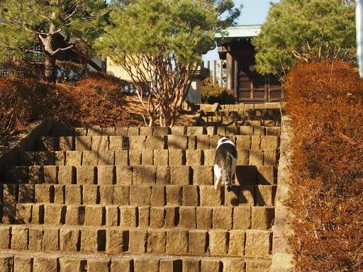 20150211・散歩猫5・大