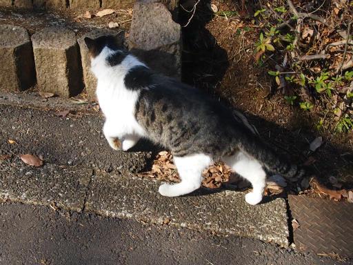 20150211・散歩猫3