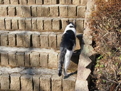 20150211・散歩猫4
