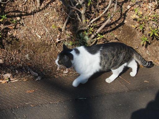 20150211・散歩猫2