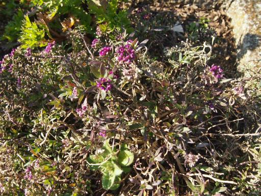 不明・20150211・狭山湖周辺植物8・不明