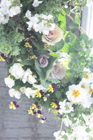 V.変り咲き品種のリース
