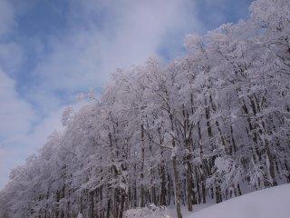 s02青空と白い木々1
