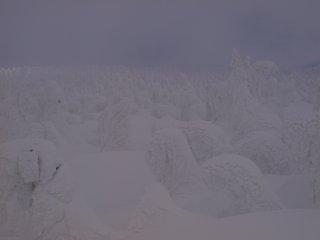 s03樹氷1