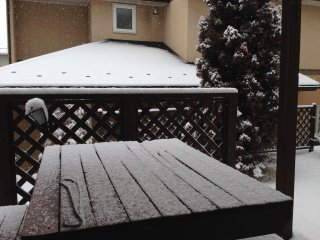 s今朝の雪