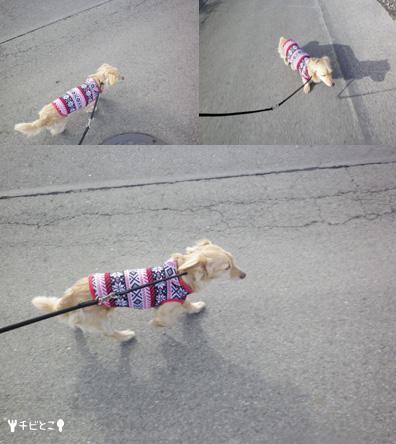 りっくんのお散歩。。