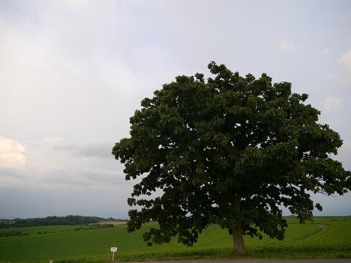 P1540153.jpg