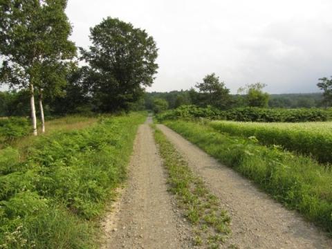 古屋牧場裏の農道