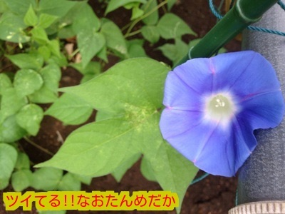 20150814195343140.jpg