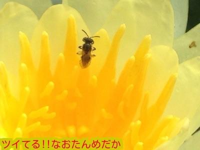 20150814195347cd4.jpg