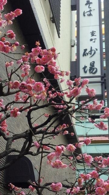 室町砂場(H272月) ⑤