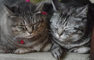 2015新年二猫