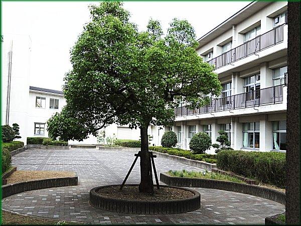 シジュウカラ_小学校の中庭