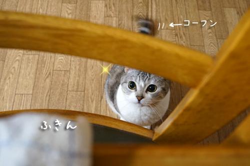 なにげないネコの日常