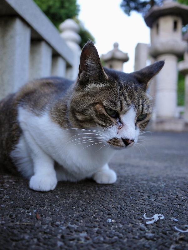 玉垣の中の猫1