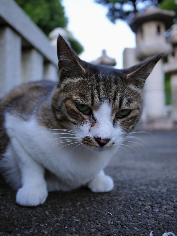 玉垣の中の猫2