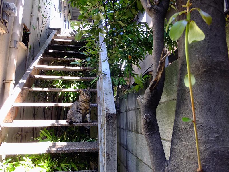 階段とブロック塀の猫