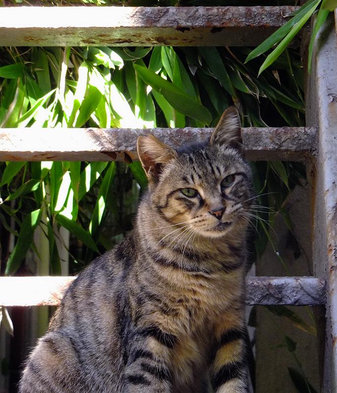 階段のキジトラ猫