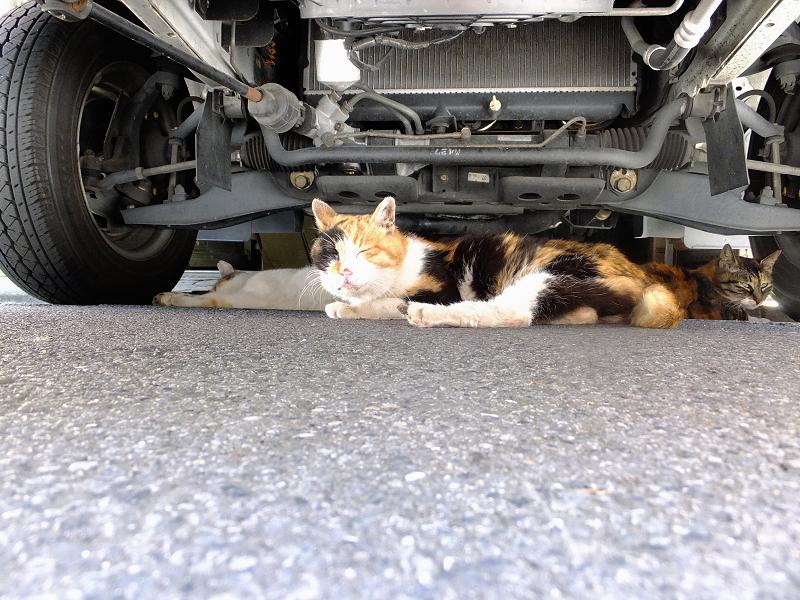 車の下の猫たち1