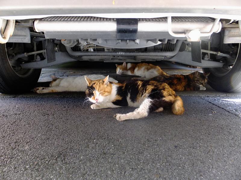 車の下の猫たち2