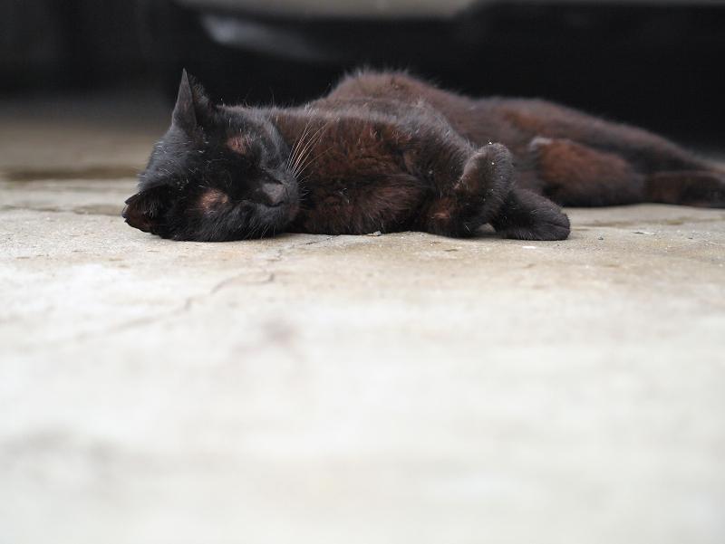 ガレージの黒猫