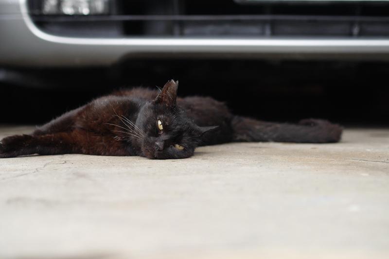 ガレージの前の黒猫1