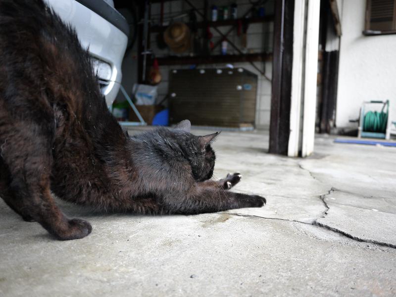 ガレージの伸び黒猫