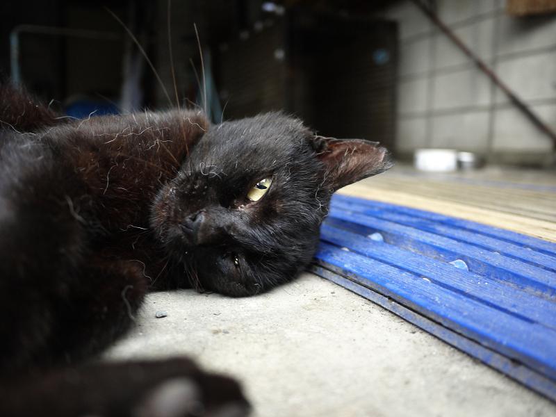 ガレージで仰向けの黒猫