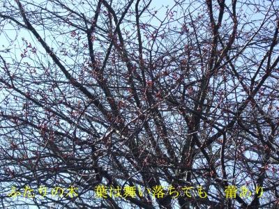 wanko0174_convert_20090206162040_20141229092941989.jpg